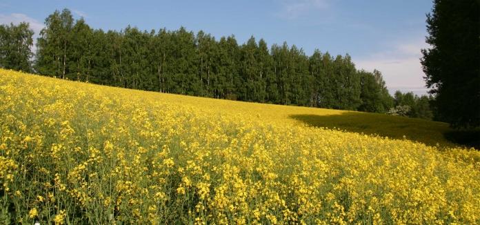 Nordic-Walking-Helden Hof - Hintergrund Sommer
